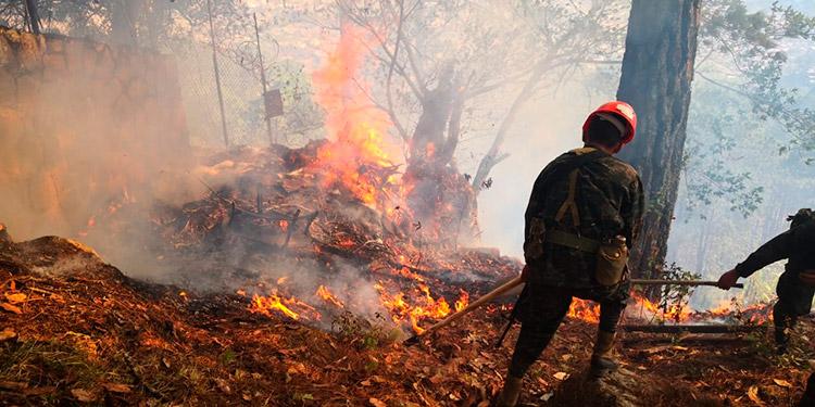 La mayoría de incendios han sido provocados por la mano criminal.