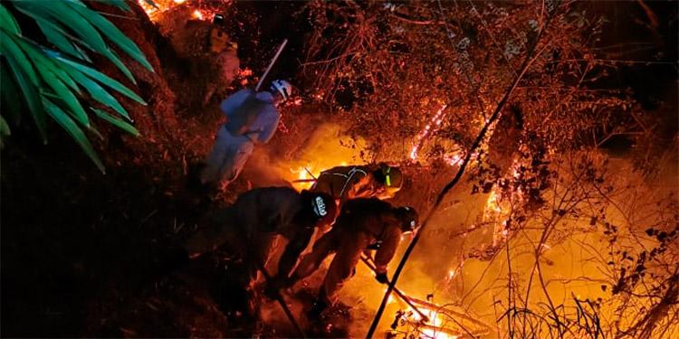 El fuego está acabando con el pino joven, lo que amenaza que en poco tiempo quedaremos sin el poco bosque que nos proporciona oxígeno y protege las fuentes de agua.