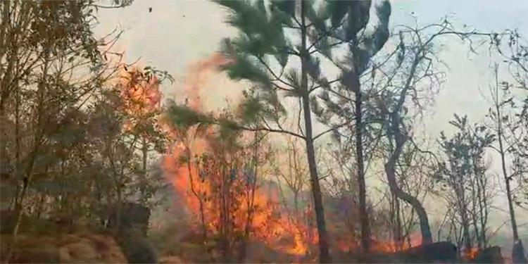 Las enormes llamas arrasaron con miles de pinos jóvenes que daban oxígeno a la zona de El Hatillo.