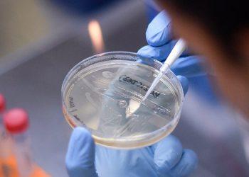 Hallan posible tratamiento contra la fiebre aftosa humana