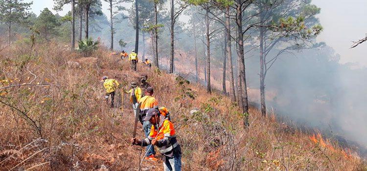 El 95% de los incendios forestales en Honduras son provocados por manos criminales