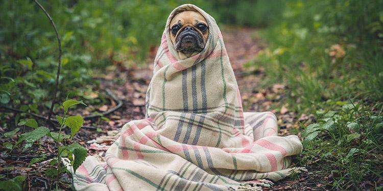 EEUU reporta su primer caso positivo de coronavirus en un perro