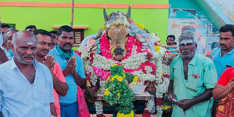 Un pueblo desafía el confinamiento para enterrar un toro en India
