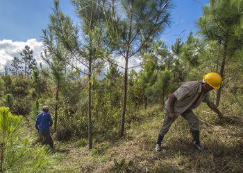 Cuidemos los bosques que son fuente de vida, mensaje de la sección Tribuna Agropecuaria.