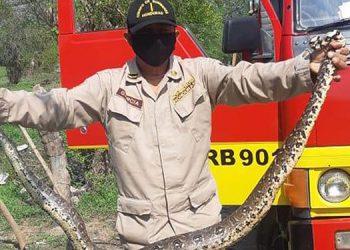 El animal estaba dentro de una vivienda de la colonia Santa Martha de la ciudad de Choluteca.