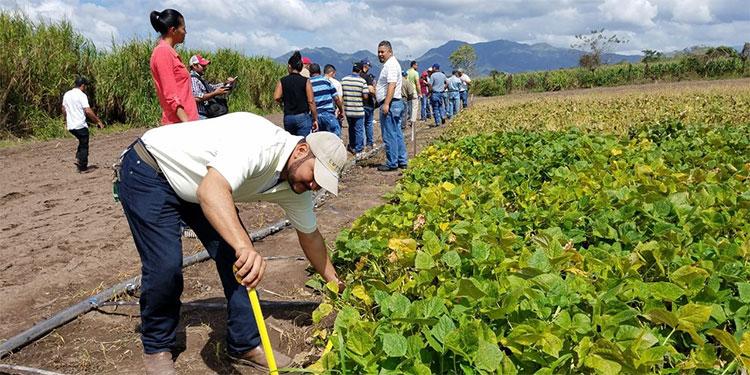 Representantes de la FAO y del IICA descartaron que se registre la falta de alimentos, sin embargo recomiendan fortalecer el agro a nivel nacional.