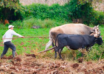 Expresidente de CNBS propone fondo de rescate de recuperación agrícola