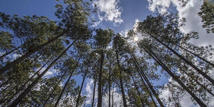 Inclusión financiera climática: Una oportunidad para la sostenibilidad ambiental en Honduras