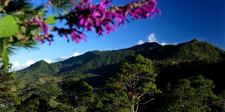 Apagüiz mide 11 kilómetros de largo, una altura de 1,200 metros sobre el nivel del mar y existen 24 especies de flora.