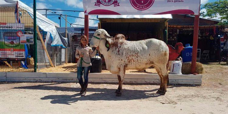 Honduras muestra avance en el mejoramiento de la genética de ganado