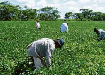 Los agricultores pueden realizar los trámites en el IP a través de la vía de digital.
