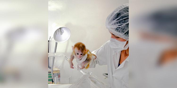 Universidad mexicana alista pruebas en animales de su vacuna contra COVID-19