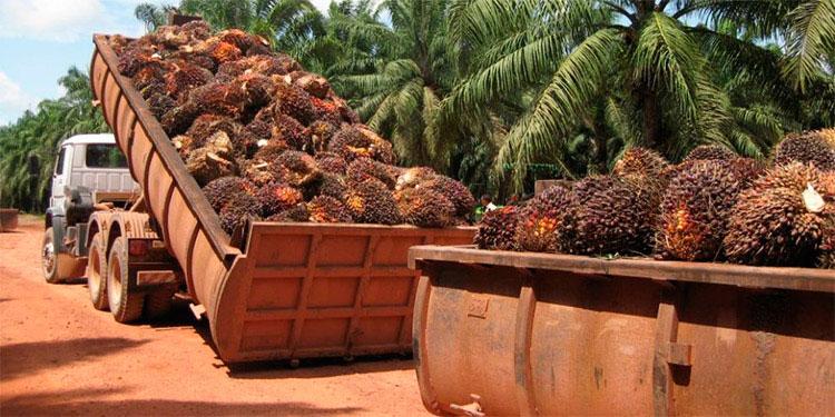 La producción de palma africana genera unos 300 mil empleos directos e indirectos, principalmente en Atlántida, Colón, Cortés y Yoro.