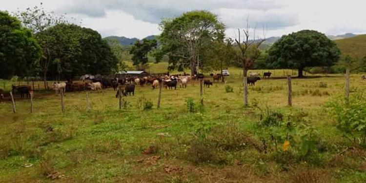 Igual que la ganadería, ahora los agricultores de Olancho solicitan la ayuda del gobierno para acceder a créditos y hacer producir la tierra.