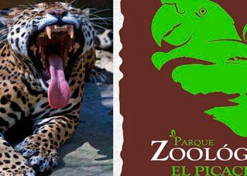 Claman ayuda para animales de zoológico