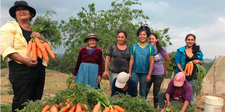 Banhprovi sigue apoyando el agro en el marco de la reactivación productiva