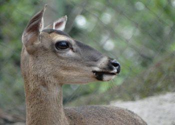 Una vez finalizada la emergencia sanitaria, el zoológico abrirá nuevamente sus puertas.