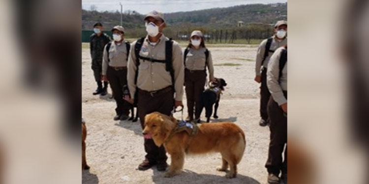 -      Los Binomios Caninos del SEPA son entrenados por adiestradores orgullosamente hondureños.