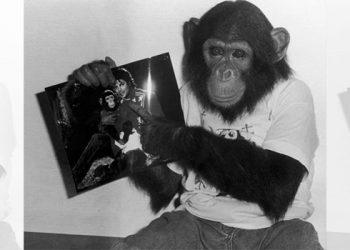¿Qué fue de Bubbles, el chimpancé de Michael Jackson?