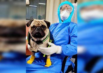 Un perro ayuda a aliviar el estrés en personal de salud de hospital mexicano (Video)