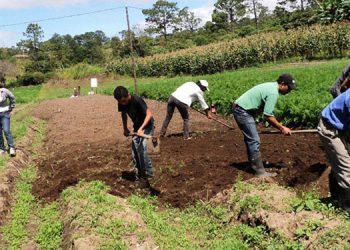 Con proyecto de ley proponen impulso de agricultura inclusiva