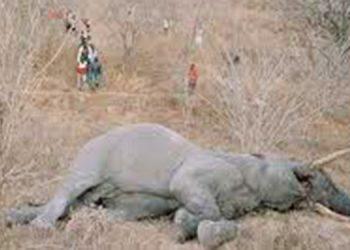 Muere una elefanta preñada al consumir una fruta llena de petardos
