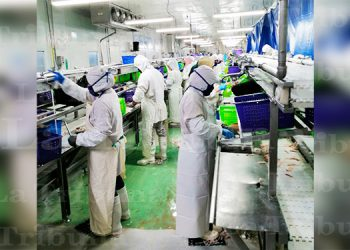 Inspeccionan empresa acuícola con 43 casos positivos de COVID-19 (Video)