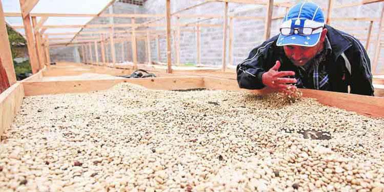 A $802 millones ascienden las exportaciones de café