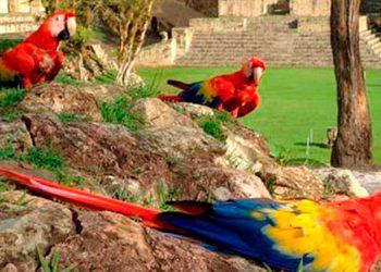 Guacamaya Fest en Copán Ruinas este año es virtual