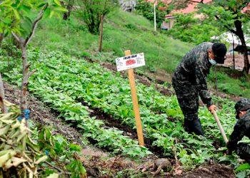 En unos dos meses los uniformados cosecharán frijol, papa, tomate, entre otros productos.