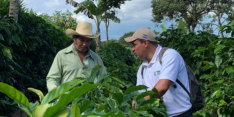 Promueven un modelo de mercado integral para la cadena de valor de café