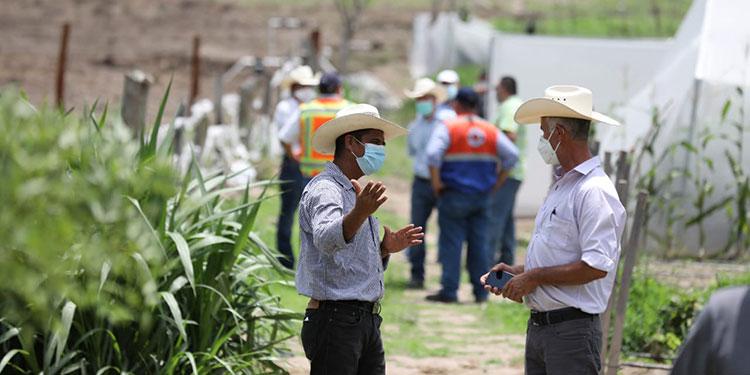 Un 70% de agricultores ya sembraron sus milpas