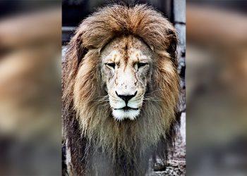Zoológico de El Picacho sigue cerrado pero los animales están bien