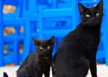Sacrifican gatos negros para hacer remedios caseros contra el COVID-19