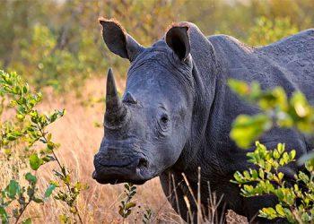 Así fue el momento en el que un grupo de turistas se libran de ser atacados por un rinoceronte (Video)