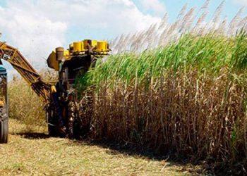 La seguridad alimentaria es una de las prioridades de esa agroindustria.
