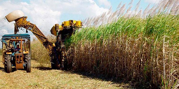 Agroindustria azucarera: orgullo nacional para el país