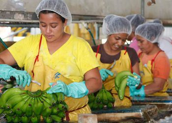 Dialogarán con ejecutivos de la Chiquita Brands