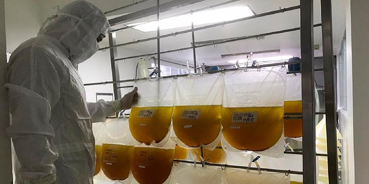 Costa Rica avanza en tratamiento a base de plasma de caballos