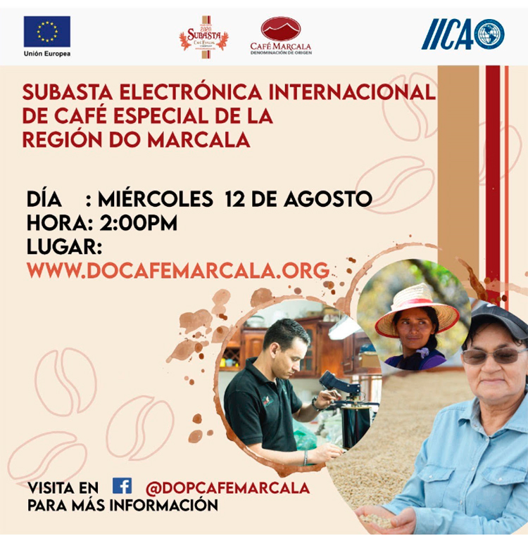 Impulsan Subasta Electrónica Internacional de cafés especiales