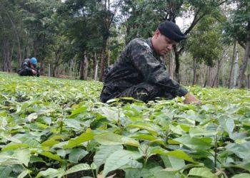 Recibidos por FF. AA. L22 millones para Programa Agrícola