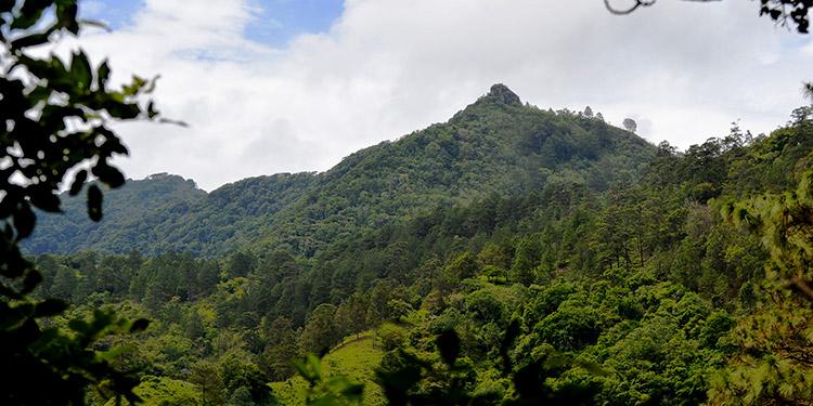 Parte de reserva biológica del macizo montañoso Apaguiz-Apapuerta.