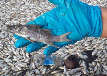 Retiran peces muertos de laguna de Santa Rosa
