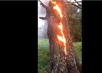 Árbol en fuego desata temores de apocalipsis (Video)