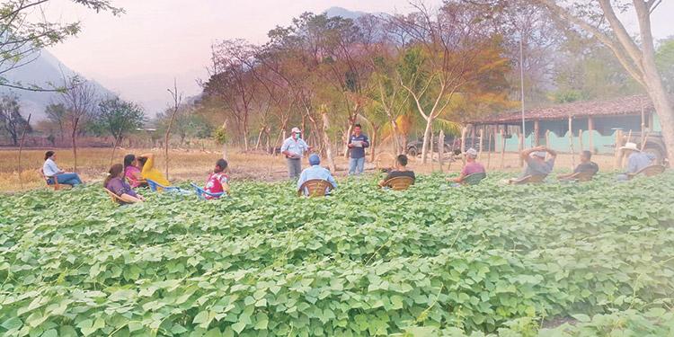 Capacitación a productores de frijol.
