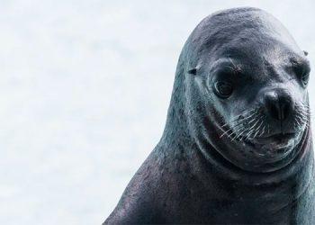 Turistas atacan con palos y piedras a una foca (Video)