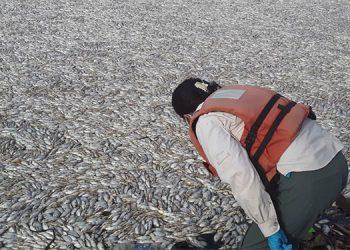 La Fiscalía ya tiene muestras tanto de peces como del agua contaminada que estaría matándolos.