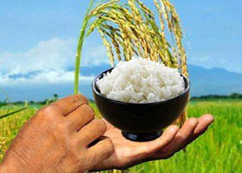 Este año favorece el buen invierno que se registra en las diferentes zonas productoras de arroz.