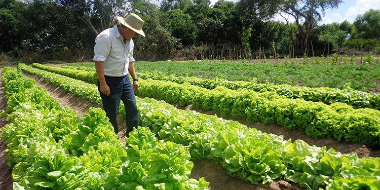 """En plena pandemia productores """"catrachos"""" cultivan alimentos"""
