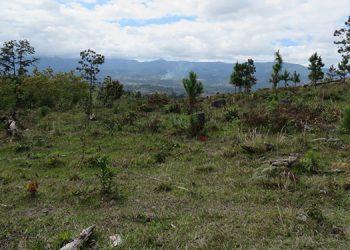 La microcuenca del río Guaratoro se encuentra muy deteriorada, por lo que es necesario impulsar su reforestación.